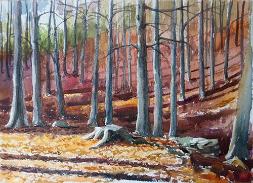 Boceto bosque de hayas