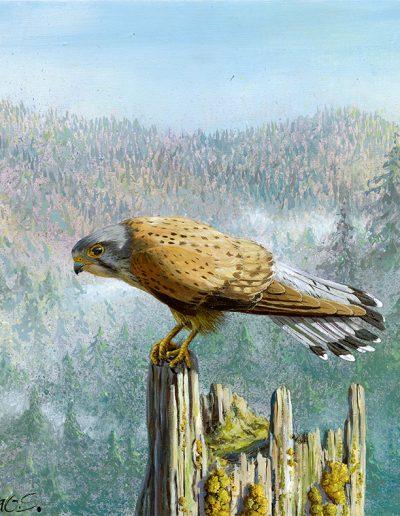 Cernícalo vulgar / Common kestrel / Falco tinnunculus – Acrílico sobre lienzo y bastidor 3D / Acrylic painting on canvas – 30,2 x 30,2 x 3,9 cm -© Lucía Gómez Serra - PVP: Consultar