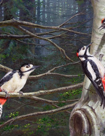 Pico picapinos / Great spotted woodpecker/ Dendrocopos major – Acrílico sobre lienzo / Acrylic painting on canvas – 46 x 33,5 cm - © Lucía Gómez Serra - PVP: 580€