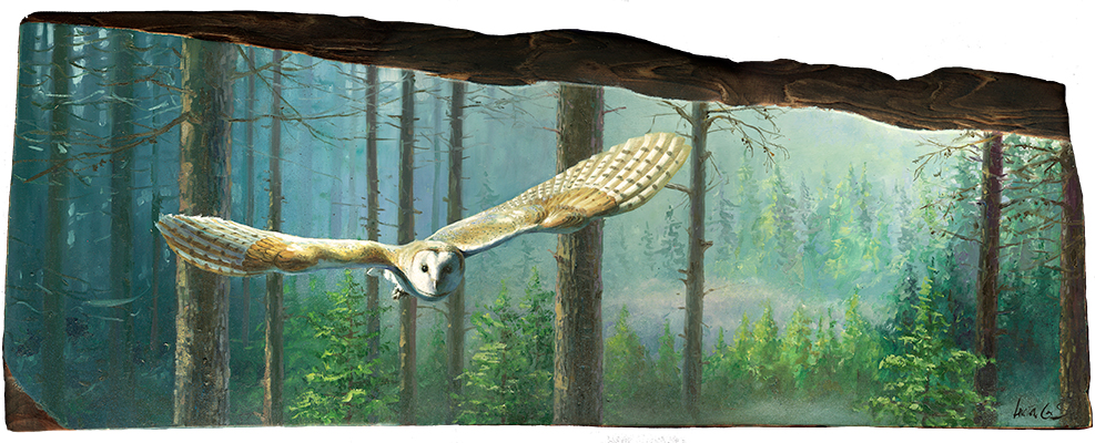 Lechuza común / Barn owl / Tyto alba – Óleo sobre tabla de madera / Oil painting on wood – 61×22,5×2,5 cm -© Lucía Gómez Serra