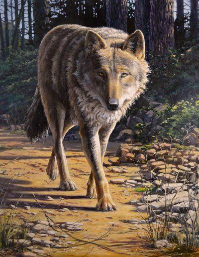 Lobo ibérico / Iberian wolf / canis lupus signatus - Óleo sobre lienzo / oil painting on canvas – © Lucía Gómez Serra - No disponible a la venta