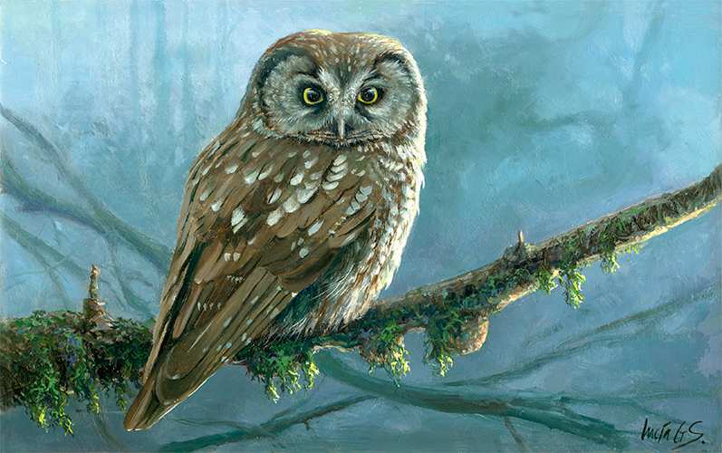 Mochuelo boreal / Tengmalm's owl / Aegolius funereus – Pintura al óleo sobre tabla de madera / Oil painting on wood – © Lucía Gómez Serra