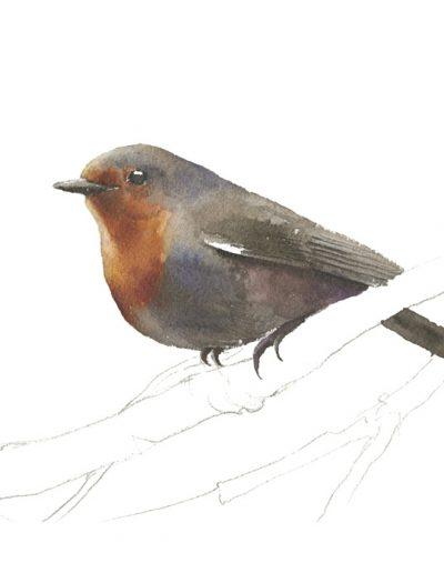 Petirrojo europeo / European robin / Erithacus rubecula – Acuarela / watercolour – © Lucía Gómez Serra