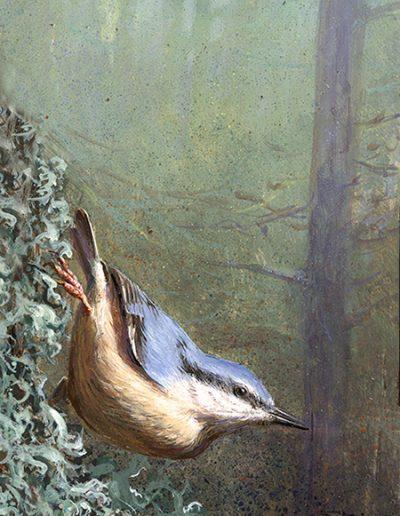 Trepador azul / Eurasian nuthatch / Sitta europaea – Acrílico sobre tabla de madera / Acrylic painting on wood – © Lucía Gómez Serra