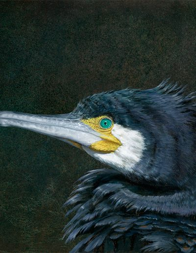 Cormorán grande / Great cormorant / Phalacrocorax carbo- Pintura al óleo sobre tabla de madera / Oil painting on wood - © Lucía Gómez Serra - PVP:  580€