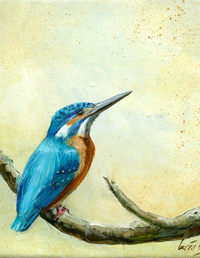 Martín pescador común / Common kingfisher / Alcedo atthis – Óleo sobre lienzo y bastidor 3D / Oil painting on canvas – 15 x 15 x 3,5 cm -© Lucía Gómez Serra - PVP: Consultar