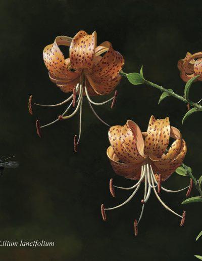 Azucena atigrada / Lilium lancifolium – Óleo sobre lienzo / Oil painting on canvas – 42 x 30 cm- © Lucía Gómez Serra - PVP: Consultar