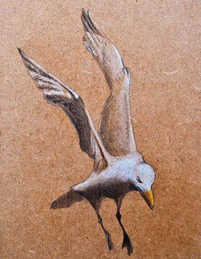 Gaviota / Seagull – Grafito / graphite -© Lucía Gómez Serra