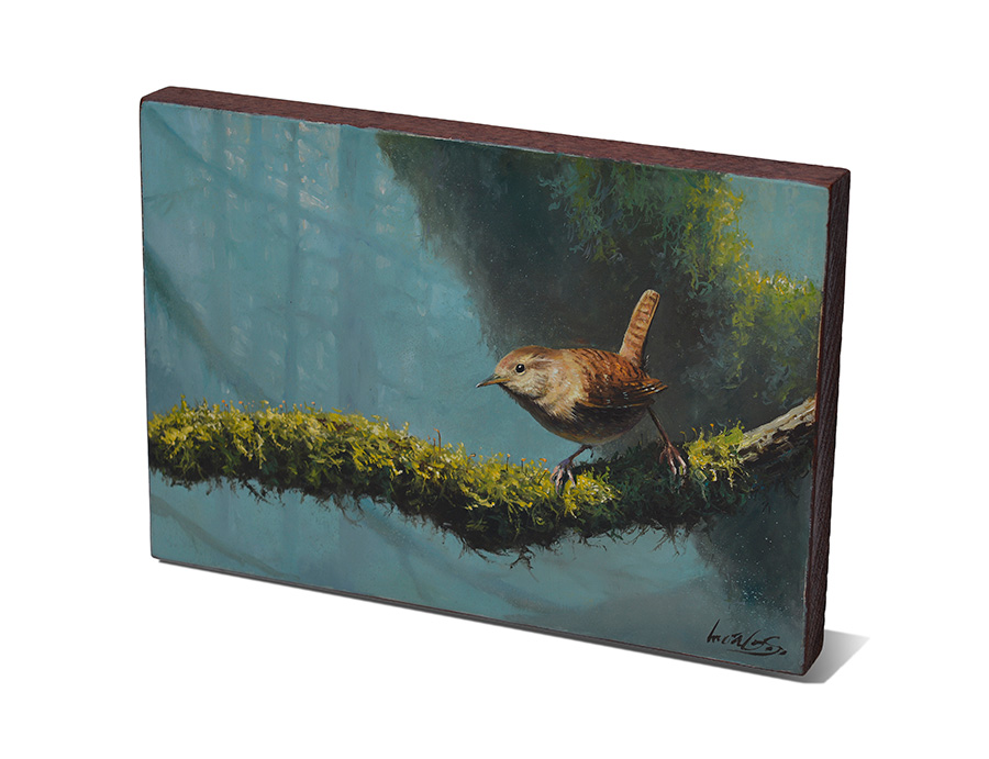Chochín común / Winter wren / Troglodytes troglodytes - Pintura al óleo sobre tabla de madera de sapeli / Oil painting on sapele wood - 23,3 x 15,7 x 2 cm - © Lucía Gómez Serra - PVP: 210 €