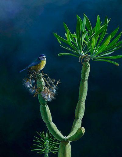 Herrerillo africano (parus teneriffae) y verode (senecio kleinia) - Pintura al óleo sobre lienzo / Oil painting on canvas - 33,5 X 46 cm © Lucía Gómez Serra -PVP: Consultar