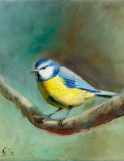 Herrerillo común / Blue tit / Cyanistes caeruleus – Óleo sobre lienzo y bastidor 3D / Oil painting on canvas – 15 x 15 x 3,5 cm -© Lucía Gómez Serra - PVP: Consultar