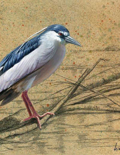 Martinete común / Night heron / Nycticorax nycticorax – Óleo sobre tabla de madera y bastidor 3D / Oil painting on wood – 30,2 x 30,2 x 3,8 cm -© Lucía Gómez Serra - PVP: Consultar