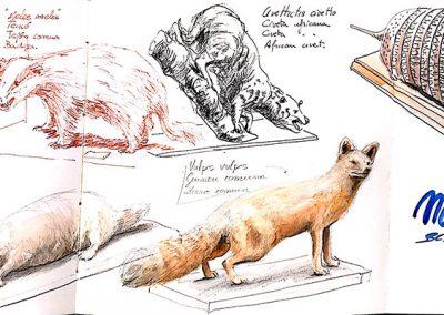Museu Blau -Urban sketching @ Lucía Gómez Serra
