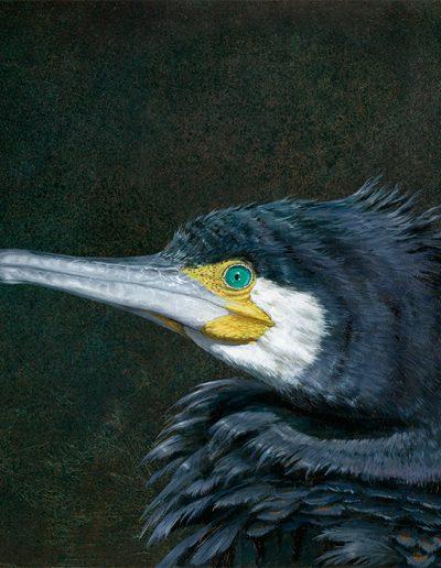 Cormorán grande / Great cormorant / Phalacrocorax carbo- Pintura al óleo sobre tabla de madera / Oil painting on wood - © Lucía Gómez Serra